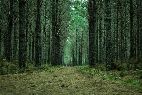 Narnia. Woodhill. Nueva Zelanda. Auckland.